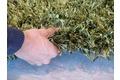 Schöner Wohnen Hochflor-Teppich, Feeling, kiwi, 55 mm Florhöhe
