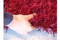 Schöner Wohnen Hochflor-Teppich, Feeling, burgund, 55 mm Florhöhe