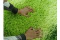 Wissenbach Lavella 80 grün Hochflor