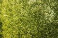 Wissenbach Salina 1060 grün Hochflor