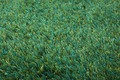 ESPRIT Hochflor-Teppich, New Glamour, ESP-3303-17, grün