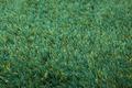 ESPRIT Hochflor-Teppich New Glamour ESP-3303-17 grün-aqua
