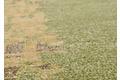 THEKO Nepalteppich Fine Nature C2460 green