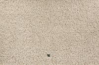 JAB Anstoetz Teppichboden Earth 3668/ 175